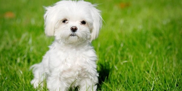 Dogs That Won't Make You Sneeze