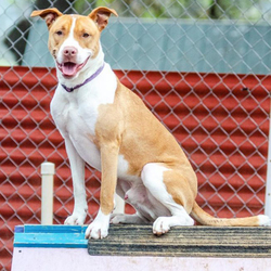 Adopt a dog:Button/Mixed Breed Mix/Male/Adult,