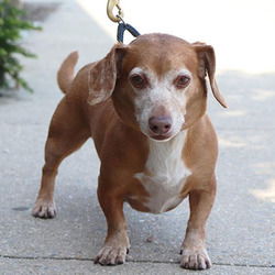 Adopt a dog:Cary Grant/Mixed Breed/Male/Adult,