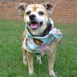 Lourdes/Beagle Mix/Female/Senior