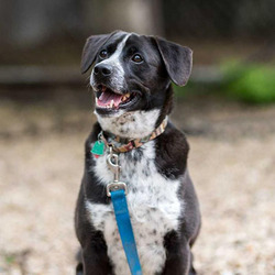 Adopt a dog:Cayden/Mixed Breed/Male/Senior,