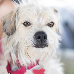 Adopt a dog:Campion/Terrier Mix/Male/Young,